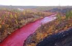 Een Siberische Rivier Kleurt Rood, De Oorzaak Is Iedereen Duidelijk, Maar De Directie Ontkent