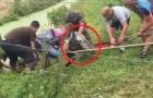 Trovano un cavallo intrappolato nel fango: il salvataggio di questi ciclisti è un vero miracolo