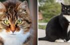 Connaissez-vous vraiment les chats domestiques? Voici 5 curiosités que vous ne savez probablement pas