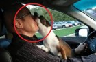 An owner takes his dog to a dog park -- see its reaction!