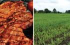 Qu'arriverait-il à nous et à la Terre si demain nous arrêtions tous de manger de la viande?