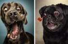 Le facce dei cani mentre provano a prendere un dolcetto al volo? Esilaranti da non credere!