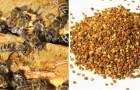 Propoli: tutti i benefici di questa miracolosa sostanza naturale