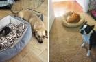 Cani contro gatti: queste immagini vi strapperanno di sicuro una risata