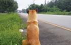 È stato appena abbandonato su una strada: il suo comportamento vi darà una stretta al cuore