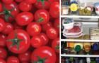 Vous conservez vos tomates dans le frigo? Voilà pourquoi vous ne devriez pas le faire