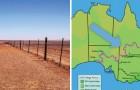 Une clôture de 5400 km qui coupe en deux l'Australie: savez-vous pourquoi elle a été construite?