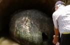 Un contadino pensa di aver trovato un uovo di dinosauro, ma la verità non è meno eccezionale