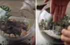 Come creare un terrario per piante che darà un tocco spettacolare alla tua casa