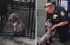Un agent sauve une chienne attachée à un poteau: voici ce qui se passe le lendemain.