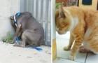 Si votre animal appuie sa tête contre le mur sans raison, allez immédiatement chez le vétérinaire. Voilà pourquoi