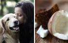 Ecco 10 alimenti che il vostro cane non deve mangiare per nulla al mondo