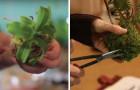 Piante in miniatura da appendere in casa: ecco come realizzare questi piccoli gioielli