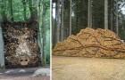 10 Menschen, die ihren Holzhaufen in ein Kunstwerk verwandelt haben