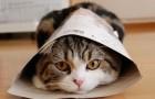 Bonjour, je suis le chat Maru