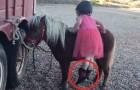 I genitori si rifiutano di aiutarla a salire sul pony: la perseveranza di questa bambina è esemplare!