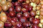 Scoprite tutti i benefici della cipolla e quale tipo dovete usare a seconda della ricetta