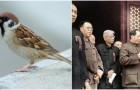 Van Mao moesten alle mussen dood: een van de ergste milieurampen in de geschiedenis
