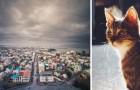 Cani vietati e case di torba: 10 curiosità su Reykjavík che molti non conoscono