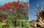 Ces 15 arbres sont parmi les plus beaux arbres que la nature nous a offert