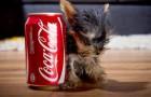El perro mas pequeño del mundo