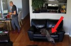 A tired dog is sleeping on a couch --- see what happens! :)