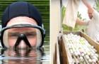 Ancien chômeur, il gagne 15 millions de dollars... pour plonger dans les étangs des terrains de golf