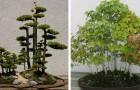 L'antica tradizione delle foreste bonsai: eccone 15 incantevoli esempi