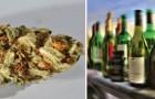 La Marijuana tue 114 fois moins que l'alcool: cette étude montre les choses telles qu'elles sont