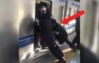 In Japan den Zug nehmen? Das passiert, wenn der Waggon voll ist...