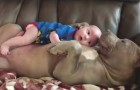 A baby and a pit bull --- such delightful sweetness is so touching!