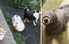 In Schwierigkeiten geraten: 23 Hunde die genau das geschafft haben