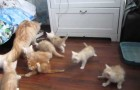 Tous aux abris, Catbomb arrive!