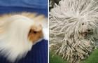 20 animali che hanno un'acconciatura migliore della tua