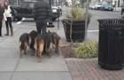 Ein Mann geht zusammen mit seinen 4 Hunden spazieren. Leinen? Die sind nicht nötig!