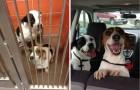 Prima e dopo l'adozione: 16 foto di cani che sono passati dalla gabbia all'amore di una famiglia