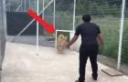 Vídeo de Tigres