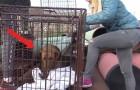 Questo cane si nascondeva DA MESI: dopo la cattura a fin di bene si trasforma completamente