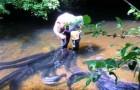 Donna coraggiosa nutre le anguille