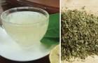 Tè all'origano: tutti i benefici di questa tisana rinvigorente e come prepararla