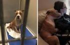 Vede un pit bull malconcio in un canile: la sua foto post-adozione fa il giro del mondo