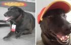 Mensen lieten deze hond achter bij een tankstation... en nu werkt hij daar fulltime!