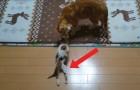 Encuentra un gatito sobre el muelle del rio: su camino hacia la sanacion los conmovera