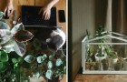 25 piante d'appartamento che trasformeranno la vostra casa in una piccola giungla
