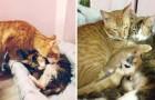 La gatta partorisce 4 cuccioli: il modo in cui papà-gatto la assiste è adorabile