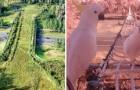 Ecodotti rispettosi della natura: grazie a questi passaggi TUTTI gli animali sono al sicuro