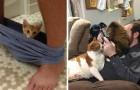 Gatti che non hanno la MINIMA concezione della privacy: ecco le loro leggendarie incursioni
