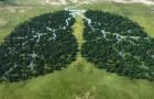 La Norvège est le premier pays dans le monde à ne plus acheter de produits qui détruisent les forêts