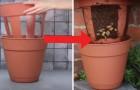 Cultivar las papas en el balcon? Aqui el truco para hacerlo con facilidad