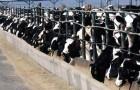 Wieviele Tiere rettet ein Vegetarier jedes Jahr?